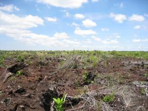 開発されたインドネシア・スマトラの熱帯泥炭湿地林