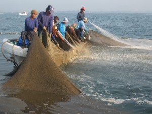 Set-net fishery introduced by a fisher group (Rayong Province, East Thailand)