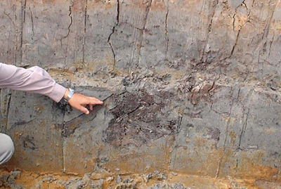 Wood fragment in silty layer, backswamp area along the Duong River