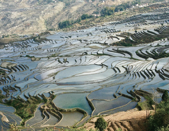 Hani Rice Terraces System