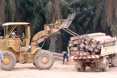 Reloading of timber. Timber from Indonesian Borneo are temporarilly deposited in borderland logponds to be exported to Malaysia, and farther to Japan and other countries.
