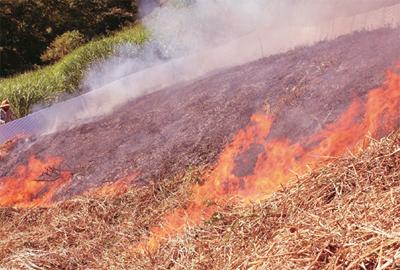 草地の火入れ(余呉町中河内私有地)。斜面上方から下方へゆっくりと火が下りていき、土にも しっかり火が入った。