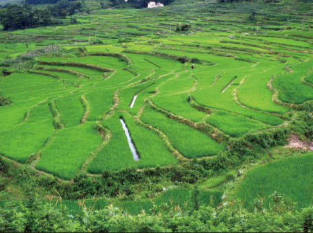Paddy fields in Yunnan Province. Fishponds have been dug in-between the fields