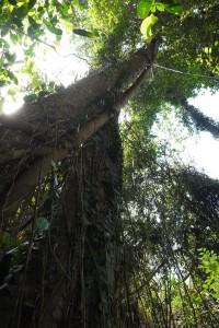 熱帯泥炭湿地の林内