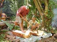 サゴヤシでんぷんの採集を行う人々。ボルネオ島内陸部ではサゴヤシは重要な主食であった。現在でも時おり森の中に入っていき、良いサゴヤシを見つけては採集を行なっている。