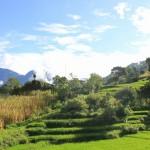 ラディの棚田 Rice terrace in Radi