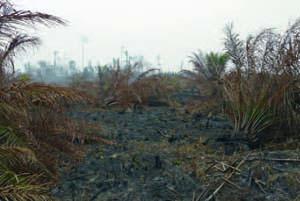 Peat fires in Sumatra